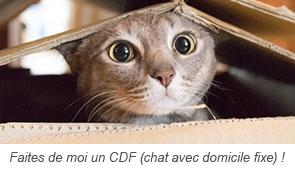 Faites de moi un CDF (chat avec domicile fixe) !