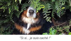 """""""Si si... je suis caché !"""""""