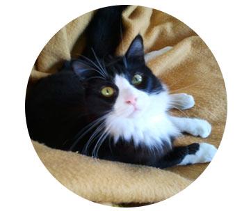 Milo le chat de Bénédicte