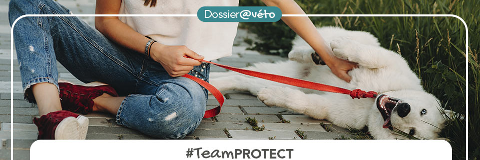 TeamPROTECT