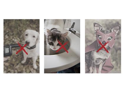 Nous nous engageons au respect du bien-être animal