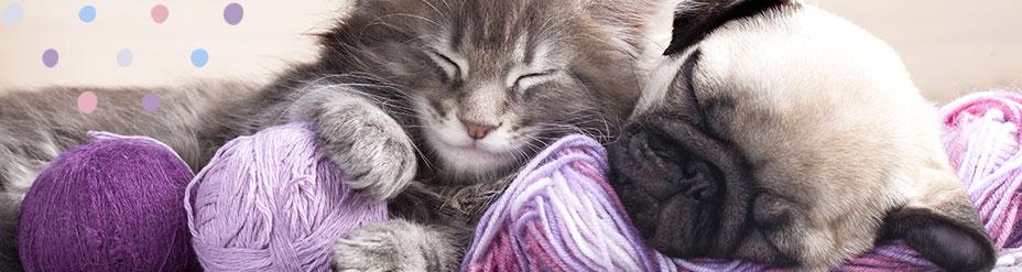 Chiot chaton