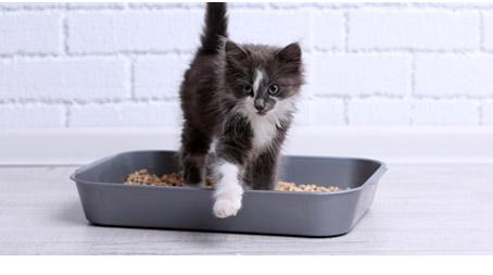 Propreté du chaton