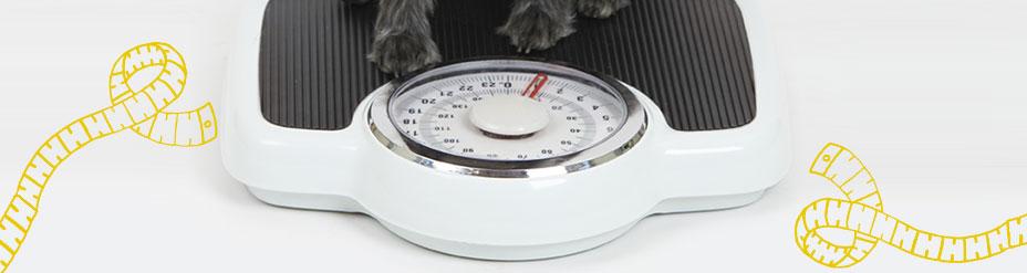 Objectif : poids idéal