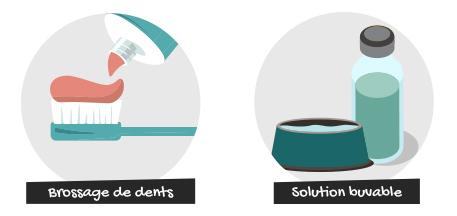Le brossage de dents et les os à mâcher contribuent à une bonne hygiène bucco-dentaire