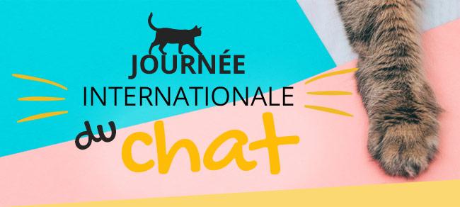 Journée internationale du chat : 24H de promos exceptionnelles !
