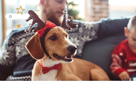 Boutique de Noel chien