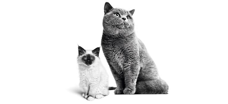 Grâce à Royal Canin, offrez à votre chat une vie en bonne santé!