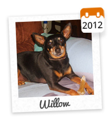 Willow, adopté en 2012