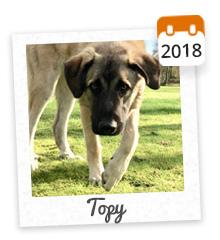 Topy, adopté en 2018