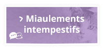 Miaulements intempestifs