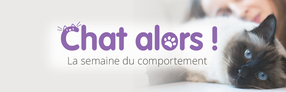 Chat alors : la semaien du comportement