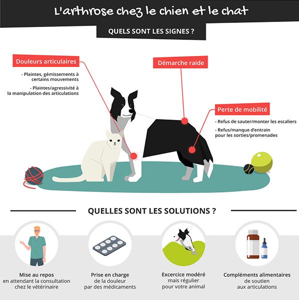 L'arthrose chez le chien et le chat