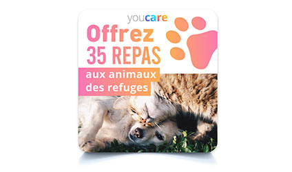 Offrez 35 repas aux animaux de refuge avec cette carte