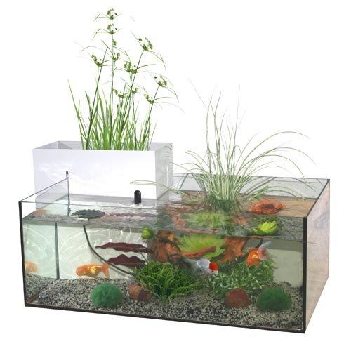 Aquarium goldfish mini pond aquarium marina wanimo for Mini poisson aquarium