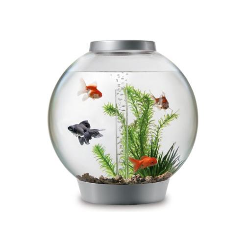Aquarium biorb intelligent led aquarium biorb wanimo for Poisson aquarium 30l