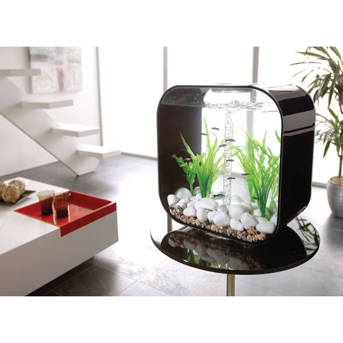 acheter un aquarium d eau de mer. Black Bedroom Furniture Sets. Home Design Ideas