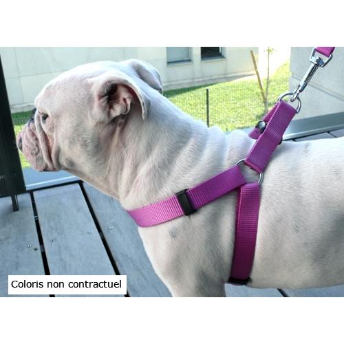 Collier, laisse et harnais - Laisse nylon gris taupe pour chiens