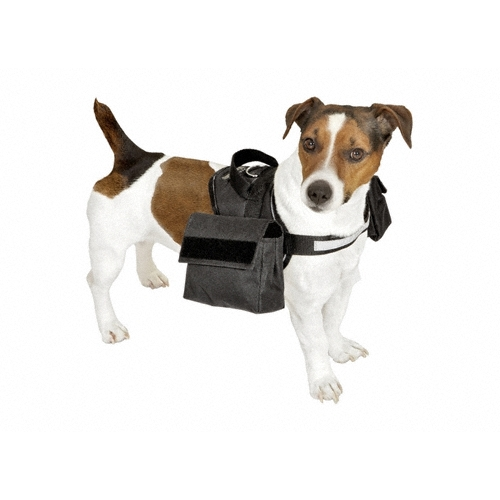 collier laisse et harnais chiens chez. Black Bedroom Furniture Sets. Home Design Ideas