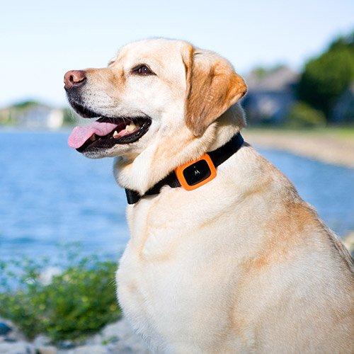 Collier, laisse et harnais - Traceur GPS Scout 2500 pour chiens
