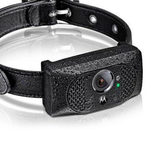 Comportement éducation - Caméra embarquée & GPS Scout 5000 pour chiens