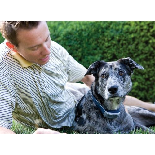 collier de dressage pour chien occasion collier dressage chien occasion sur enperdresonlapin. Black Bedroom Furniture Sets. Home Design Ideas