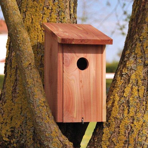 redirecting to fr oiseaux exterieur oiseaux des jardins. Black Bedroom Furniture Sets. Home Design Ideas
