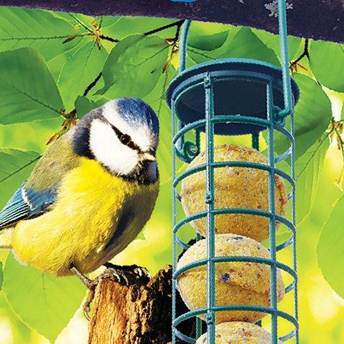 distributeur 5 boules de graisse distributeur de nourriture pour oiseaux des jardins. Black Bedroom Furniture Sets. Home Design Ideas