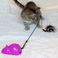 Jouet pour chat - Jouet Crazy Mouse