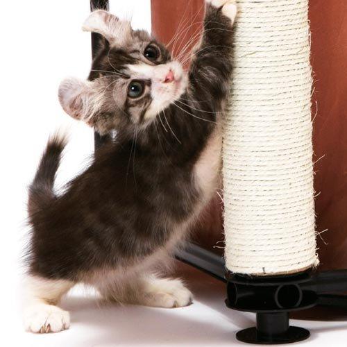 aire de jeu hideaway aire de jeu pour chat kitty city wanimo. Black Bedroom Furniture Sets. Home Design Ideas