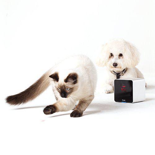 petcube cam ra interactive objet connect pour chien et chat wanimo. Black Bedroom Furniture Sets. Home Design Ideas