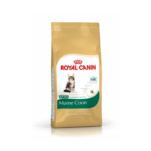 royal canin breed nutrition croquettes pour chat kitten maine coon wanimo. Black Bedroom Furniture Sets. Home Design Ideas