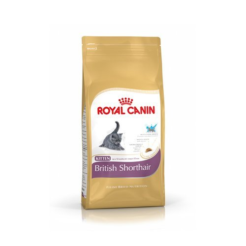 royal canin breed nutrition croquettes pour chat kitten british shorthair wanimo. Black Bedroom Furniture Sets. Home Design Ideas
