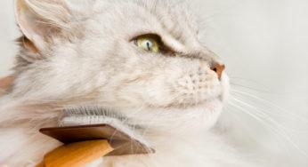 Lire la suite: Entretien du pelage du chat