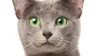Lire la suite: Hygiène des oreilles du chat