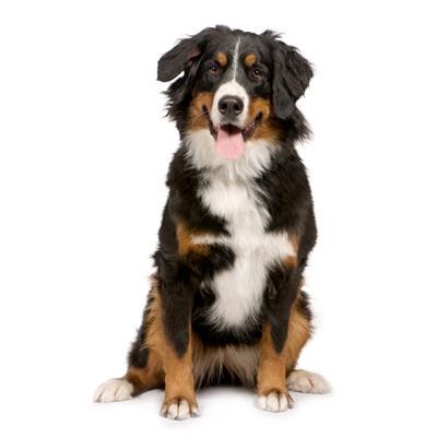Lire la suite: La réglementation pour l'achat d'un chien