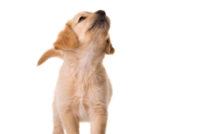 Lire la suite: Quand acheter un chien ?