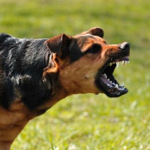 Lire la suite: La rage chez le chien