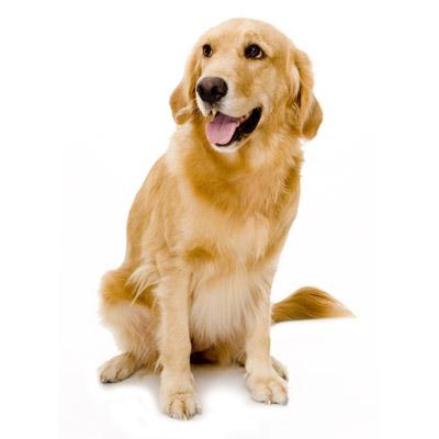 Lire la suite: Questions à se poser avant d'adopter un chien