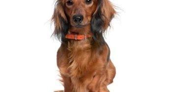 Lire la suite: La chute des poils chez le chien