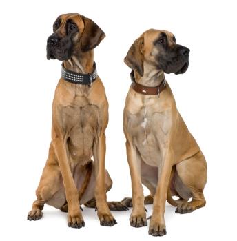 choisir un m le ou une femelle comment choisir un chien accueillir un chien chiens. Black Bedroom Furniture Sets. Home Design Ideas