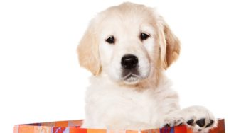 Lire la suite: Les vices rédhibitoires du chien