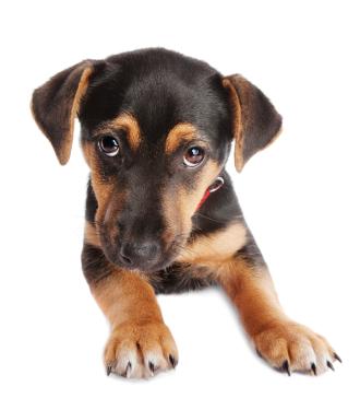 apprendre au chiot rester seul education du chien education chiens. Black Bedroom Furniture Sets. Home Design Ideas