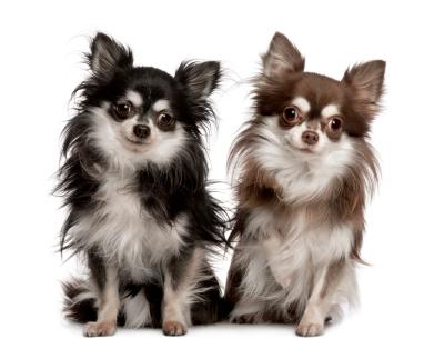 Lire la suite: La gale d'oreilles chez le chien