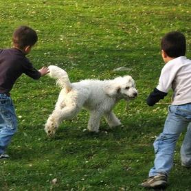 Enfants jouant avec un chien