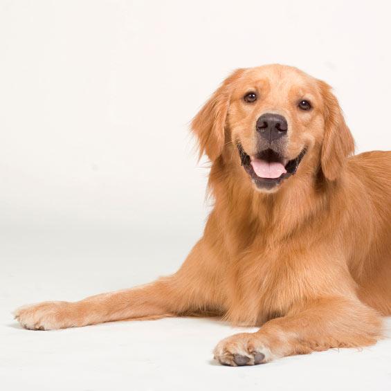 epilepsie chez le chien m decine g n rale du chien sant chiens. Black Bedroom Furniture Sets. Home Design Ideas