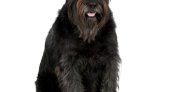 Lire la suite: Les besoins nutritionnels du chien senior