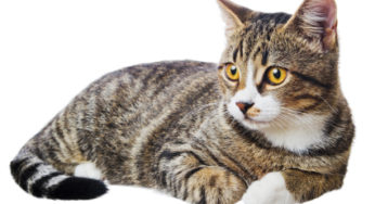 La diarrhée du chat