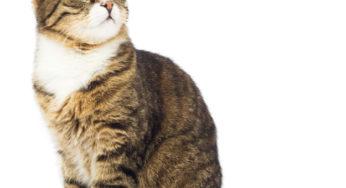 Il existe des traitements pour combattre le stress de chat
