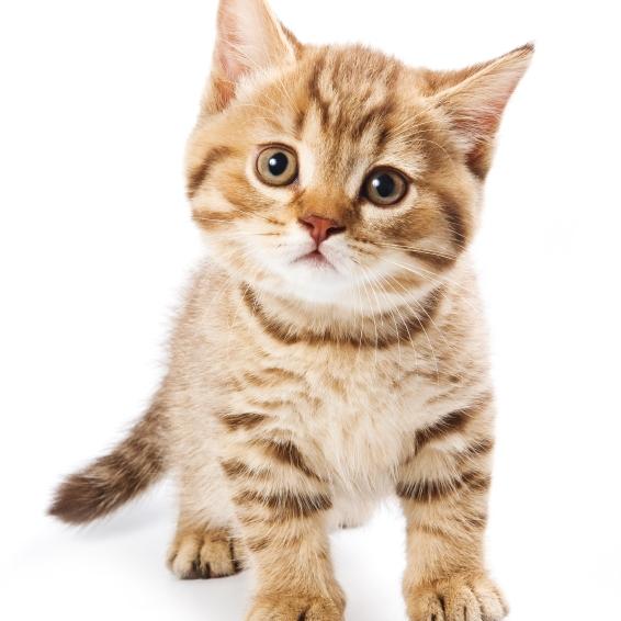 Les diarrh es aigu s chez le chat pathologies de l - Image de petit chat ...